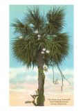 Palm Tree Entwining with Night-Blooming Cereus Poster