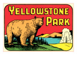 Bear in Yellowstone Park Posters