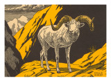 Woodcut of Dalls Sheep Prints