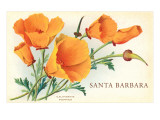 California Poppy, Santa Barbara, California Art