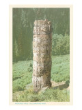 Petrified Tree, Yellowstone National Park Print