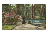 Magnolia Gardens, Charleston, South Carolina Print