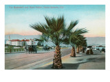 Hotel Potter, Palm Trees, Santa Barbara, California Prints