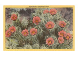 Strawberry or Hedgehog Cactus Prints