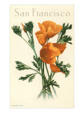 California Poppy, San Francisco - Art Print