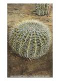 Pincushion Cactus Posters