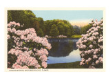 Rhododendrons, State Flower of Washington Prints