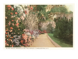 Slope Walk, Charleston, South Carolina Print