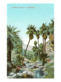 A Palm Canyon in California Posters