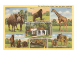 Scenes of Animals from Zoo, San Diego, California Posters