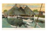 Pile of Oyster Shells, Hampton, Virginia Plakaty