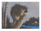 Porcupine on Stump Posters