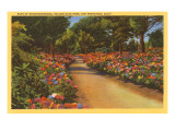 Rhododendrons, Golden Gate Park, San Francisco, California Print