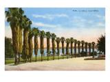 Park, La Jolla, San Diego, California Poster