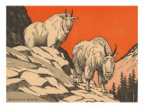 Woodcut of Mountain Goats Posters