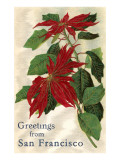 Greetings from San Francisco, California, Poinsettias Posters