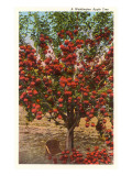 A Washington Apple Tree Prints