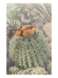 Flowering Barrel Cactus Poster