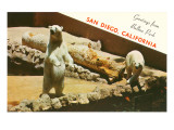Polar Bears, San Diego Zoo Prints