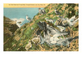 Sea Gull Nest, Coronado Islands, California Prints