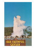 Old Faithful Geyser, Yellowstone National Park Posters