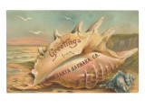Conch Shell, Greetings from Santa Barbara, California Prints