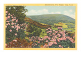 Rhododendron, State Flower of West Virginia Posters