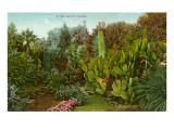 Cactus Garden Prints