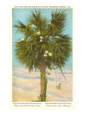 Palm Tree Entwined with Night-Blooming Cereus, Poem Prints