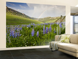 Lupines in Bloom and Rainbow After Rain, Bighorn Mountains, Wyoming, USA Wall Mural – Large by Larry Ditto