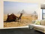 Lone Camel Gazes Across the Giza Plateau Outside Cairo, Egypt Wall Mural – Large by Dave Bartruff
