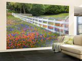 Texas Bluebonnets and Paintbrush Along White Fence Line, Texas, USA Wall Mural – Large by Julie Eggers