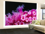 Jewel Anemones Cover the Rails of Rainbow Warrior Ship Near Cavalli Islands, New Zealand Wall Mural – Large by Jenny & Tony Enderby