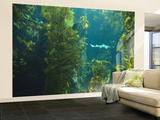 Monterey Bay Aquarium, Cannery Row, Monterey, Central California Coast, USA Wall Mural – Large by Stuart Westmorland