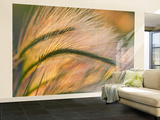 Foxtail Barley Backilt Near East Glacier, Montana, USA Wall Mural – Large by Chuck Haney