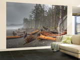 Beached Trees From Ocean Storms, Rialto Beach, Olympic National Park, Washington, USA Wall Mural – Large by Jamie & Judy Wild