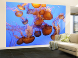 Jellyfish at the Monterey Bay Aquarium Wall Mural – Large par Douglas Steakley