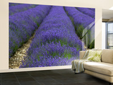 Lavender Fields. Wall Mural – Large by Doug McKinlay