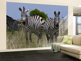 Common Zebra, Masai Mara National Reserve, Kenya Wall Mural – Large by Sergio Pitamitz