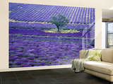 Lavender Fields, Vence, Provence, France Wall Mural – Large by Gavriel Jecan