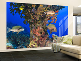 Harlequin Sweetlips, Butterflyfish and Glasseye, Palau, Micronesia Wall Mural – Large by Stuart Westmorland