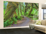 Hall of Mosses, Hoh Rain Forest, Olympic National Park, Washington, USA Wall Mural – Large by Jamie & Judy Wild