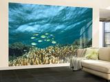 Damselfish, Tukang Besi/Wakatobi Archipelago Marine Preserve, South Sulawesi, Indonesia Reproduction murale (géante) par Stuart Westmorland