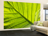 Tropical Foliage in Alexandria and the Amphitheater, Egypt Wall Mural  Large by Darrell Gulin