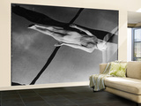 Swimmer Jeanne Wilson Underwater Wall Mural  Large by Wallace Kirkland