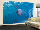 Purple Ocean Jelly Fish, Ras Banas, Red Sea Wall Mural – Large by Mark Webster