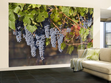 Close Up of Cabernet Sauvignon Grapes, Haras De Pirque Winery, Pirque, Maipo Valley, Chile Wall Mural – Large by Janis Miglavs