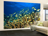Schooling Damselfish, North Huvadhoo Atoll, Southern Maldives, Indian Ocean Wall Mural – Large by Stuart Westmorland