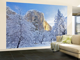 Sunrise Light Hits El Capitan Through Snowy Trees in Yosemite National Park, California, USA Wall Mural – Large by Chuck Haney
