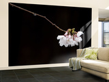 Cherry Blossom Detail Wall Mural – Large by Brent Winebrenner